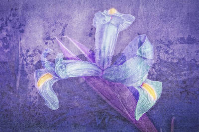 Poster featuring the photograph Iris Number Seven by Bob Coates