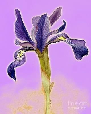 Iris On Lilac Poster