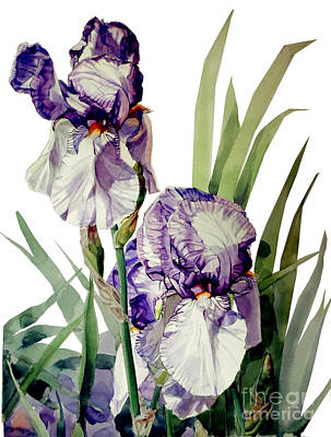 Watercolor Of A Tall Bearded Iris In Violet And White I Call Iris Selena Marie Poster