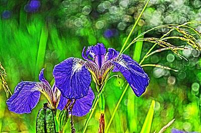 Poster featuring the photograph Irises by Cathy Mahnke