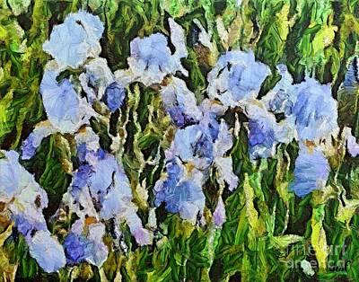 Irises Poster by Dragica  Micki Fortuna