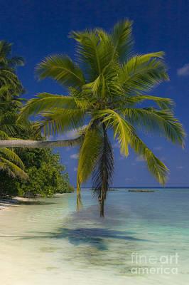 Island Dream Poster