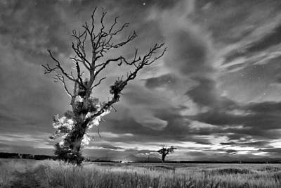 Isolated Tree Poster by Buster Brown