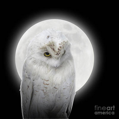 Isolated White Owl In Night With Moon Poster by Angela Waye
