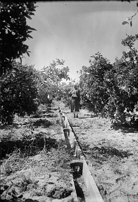 Israel Irrigation, C1937 Poster