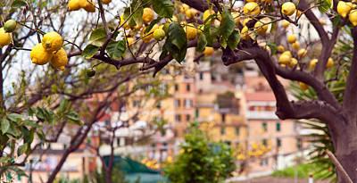 Italian Lemon Grove Poster by Mike Reid