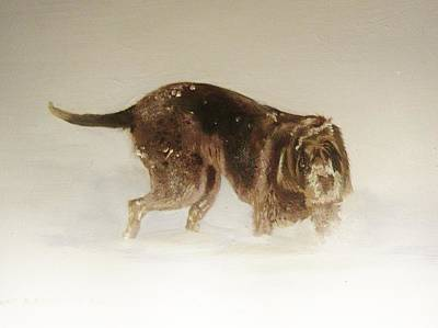 Italian Spinone In The Snow Poster