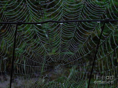 Itsy Bitsy's Spider Web Poster by Amy Stuart Langlo