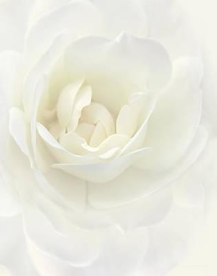 Ivory Dream Rose Flower Poster