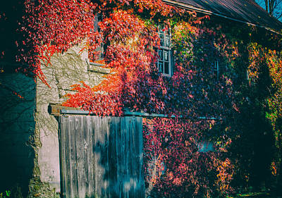 Ivy Covered Barn Poster