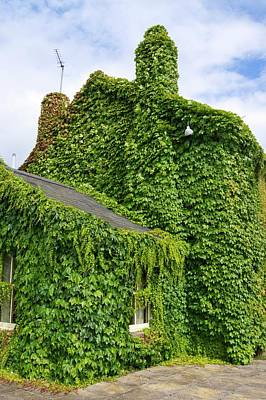 Ivy Growth On A Building Poster by Mark Williamson