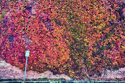 Ivy Rainbow Poster