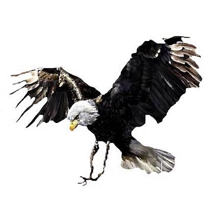 J6939 Broken Winged Bird Collection Poster