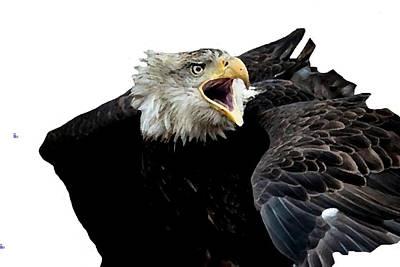 j6940 Broken Winged Bird Collection Poster