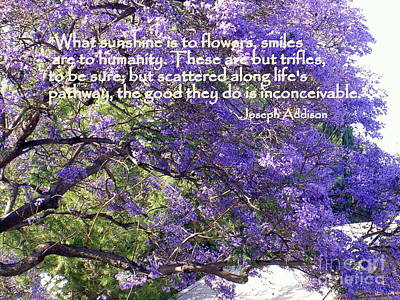 Jacaranda Beauty Smile Quote Poster by Marlene Rose Besso