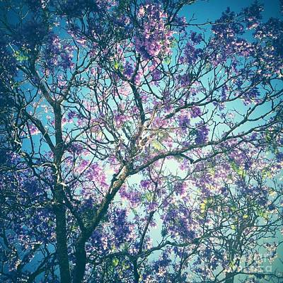 Jacaranda Tree 2 Poster by Neil Overy