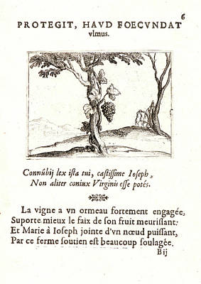 Jacques Callot French, 1592 - 1635. Le Cep De Vigne Poster by Litz Collection