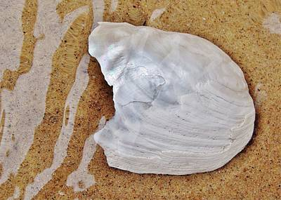 Jagged White Shell Poster by Kathi Mirto
