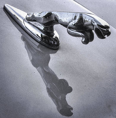 Jaguar Leaper And Reflection Poster