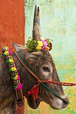Poster featuring the photograph Jallikattu Bull by Dennis Cox WorldViews
