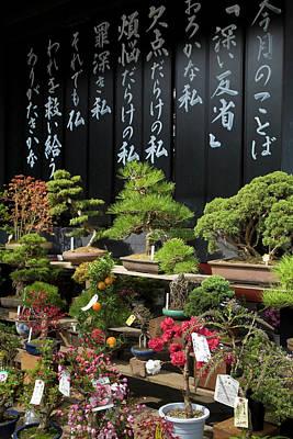 Japan, Tokyo, Display Of Bonsai Trees Poster