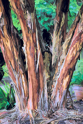 Japanese Crape Myrtle Tree Poster by Dan Carmichael