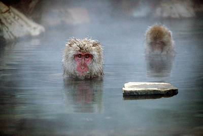 Japanese Macaques In A Hot Spring Poster by Andy Crump