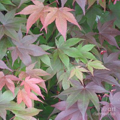 Poster featuring the photograph Japanese Maple Leaves by Christina Verdgeline