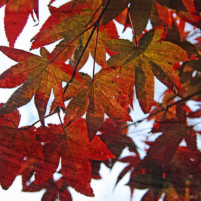 Poster featuring the photograph Japanese Maple Leaves With Woodgrain by Brooke T Ryan