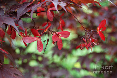 Poster featuring the photograph Japanese Maple Tree by Eva Kaufman