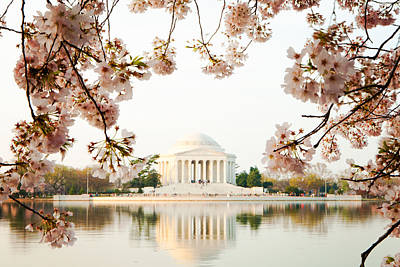 Jefferson Memorial With Reflection And Cherry Blossoms Poster by Susan Schmitz
