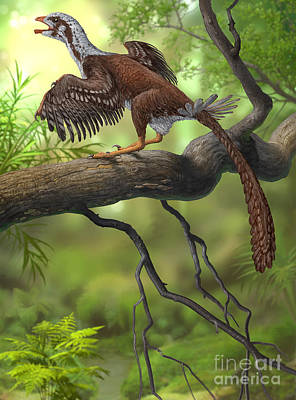 Jeholornis Prima Perched On A Tree Poster by Sergey Krasovskiy
