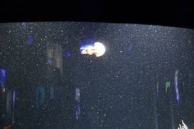 Jellyfish - National Aquarium In Baltimore Md - 121234 Poster by DC Photographer