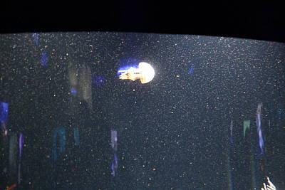 Jellyfish - National Aquarium In Baltimore Md - 121234 Poster