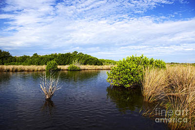 Joe Fox Fine Art - Flooded Grasslands With Mangrove Forest In The Background In The Florida Everglades Usa Poster by Joe Fox