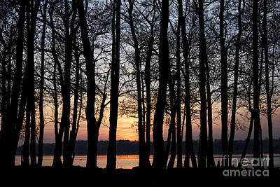 Joe Fox Fine Art - Sun Setting Through Trees On Lough Neagh Northern Ireland Poster