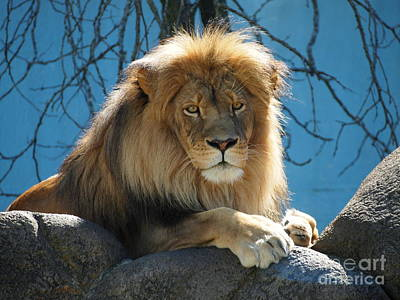 Joshua The Lion On His Rock Poster
