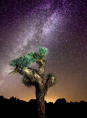 Poster featuring the photograph Joshua Tree Vs The Milky Way by Robert  Aycock