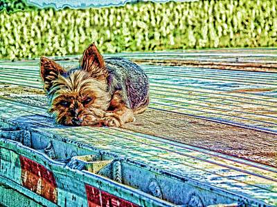 Poster featuring the photograph 'jovie' Truckin Dog's Need Breaks Too by Robert Rhoads