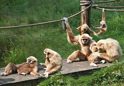 Joyful Monkey Family Poster