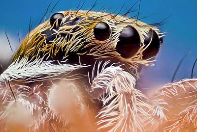 Jumping Spider Head Poster