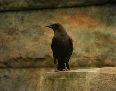 Just A Blackbird  Poster