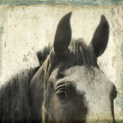 Just A Horse Poster by Gothicrow Images