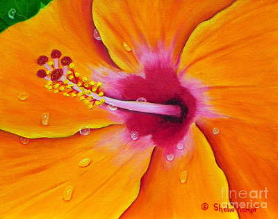 Poster featuring the painting Just Peachy - Hibiscus Flower  by Shelia Kempf