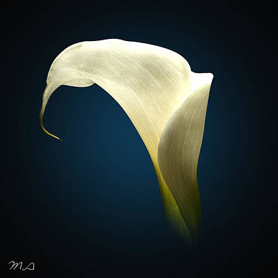 Cala Lily Poster