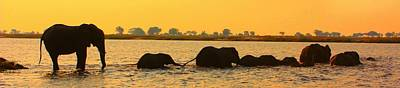Poster featuring the photograph Kalahari Elephants Crossing Chobe River by Amanda Stadther