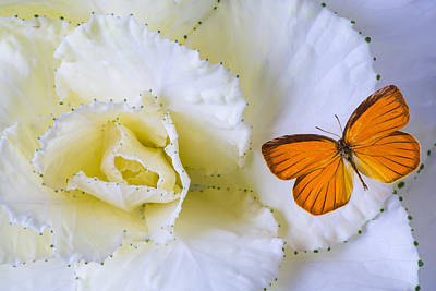 Kale And Orange Butterfly Poster by Garry Gay