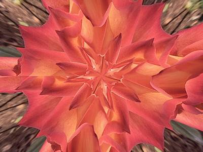 Poster featuring the photograph Kaleidoscope Rose by Michele Kaiser