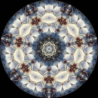 Kaleidoscope Seashells Poster by Cathy Lindsey