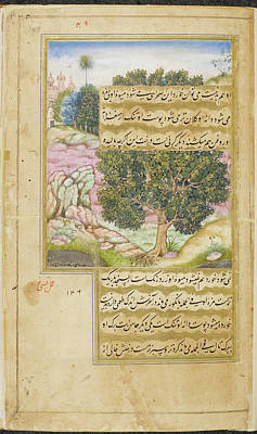 Kami Tree (mimusops Kauki) Poster by British Library